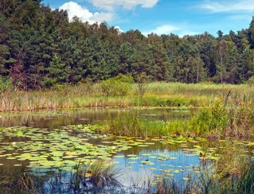 Creating a Wildlife Habitat – Ponds and Wetlands