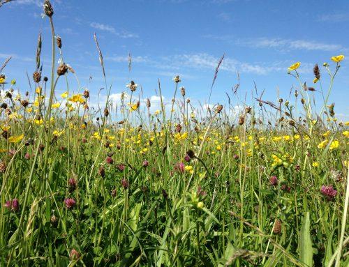 Inside Your Wildflower Meadow