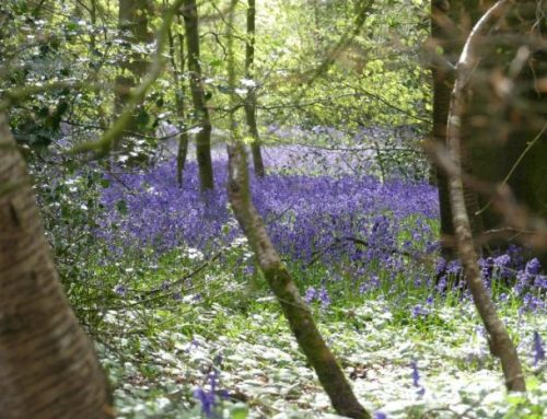 Creating a Wildlife Haven – Woodlands