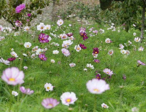 Weed or Wildflowers