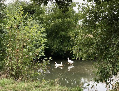 Dredging Ditches – Flooding help or hazard?
